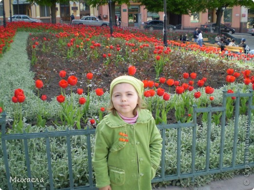 Я живу в городе Черновцы,Украина, в этом городе живу уже 7 лет, но весной заметила что у нас в городе очень много красивых тюльпанов. фото 5