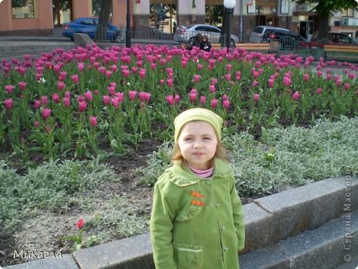 Я живу в городе Черновцы,Украина, в этом городе живу уже 7 лет, но весной заметила что у нас в городе очень много красивых тюльпанов. фото 4