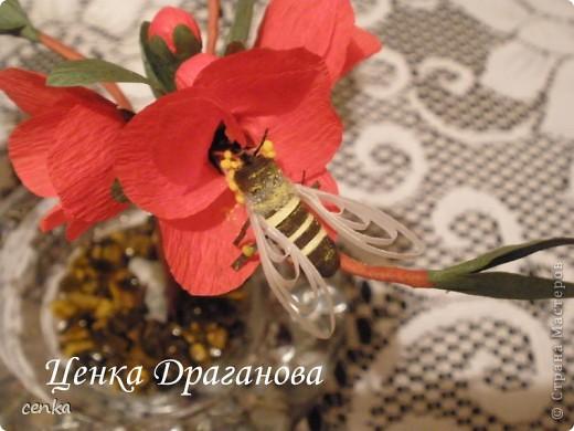 Японска дюля и моите първи пчели фото 2