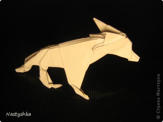 Волк фото 1