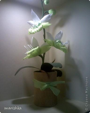 Мне очень захотелось попробовать сделать сладкие орхидеи. Опыт уже кое-какой имеется. Вот я и отправилась в цветочные магазины, интернет... От разнообразия форм и цвета я просто растерялась.Чем больше я смотрела на эти необыкновенные растения, тем больше удивлялась и восторгалась.И в итоге набралась наглости и вывела свой сорт , надеясь,что меня сильно не побьют истинные ценители и знатоки этой красоты. фото 2