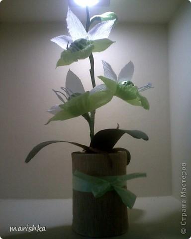 Мне очень захотелось попробовать сделать сладкие орхидеи. Опыт уже кое-какой имеется. Вот я и отправилась в цветочные магазины, интернет... От разнообразия форм и цвета я просто растерялась.Чем больше я смотрела на эти необыкновенные растения, тем больше удивлялась и восторгалась.И в итоге набралась наглости и вывела свой сорт , надеясь,что меня сильно не побьют истинные ценители и знатоки этой красоты. фото 7