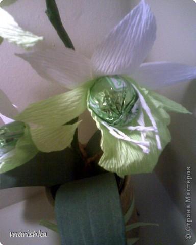 Мне очень захотелось попробовать сделать сладкие орхидеи. Опыт уже кое-какой имеется. Вот я и отправилась в цветочные магазины, интернет... От разнообразия форм и цвета я просто растерялась.Чем больше я смотрела на эти необыкновенные растения, тем больше удивлялась и восторгалась.И в итоге набралась наглости и вывела свой сорт , надеясь,что меня сильно не побьют истинные ценители и знатоки этой красоты. фото 3
