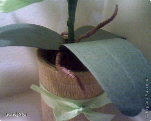 Мне очень захотелось попробовать сделать сладкие орхидеи. Опыт уже кое-какой имеется. Вот я и отправилась в цветочные магазины, интернет... От разнообразия форм и цвета я просто растерялась.Чем больше я смотрела на эти необыкновенные растения, тем больше удивлялась и восторгалась.И в итоге набралась наглости и вывела свой сорт , надеясь,что меня сильно не побьют истинные ценители и знатоки этой красоты. фото 4
