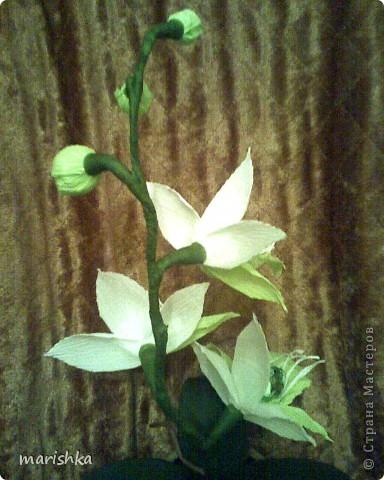Мне очень захотелось попробовать сделать сладкие орхидеи. Опыт уже кое-какой имеется. Вот я и отправилась в цветочные магазины, интернет... От разнообразия форм и цвета я просто растерялась.Чем больше я смотрела на эти необыкновенные растения, тем больше удивлялась и восторгалась.И в итоге набралась наглости и вывела свой сорт , надеясь,что меня сильно не побьют истинные ценители и знатоки этой красоты. фото 5
