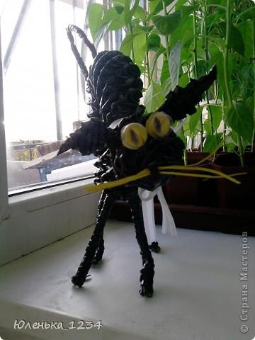 Сумасшедший черный кот=) фото 2