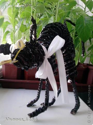 Сумасшедший черный кот=) фото 1