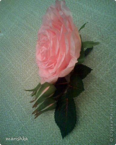 Было замечательное настроение и я решила сделать большие розочки. Первую,с диаметром цветка примерно 15 см, я сделала из гофрированной бумаги(гофр бумага для оформления букетов,более жесткая ,чем обычная гофрированная бумага). фото 7