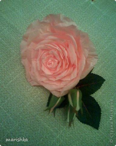 Было замечательное настроение и я решила сделать большие розочки. Первую,с диаметром цветка примерно 15 см, я сделала из гофрированной бумаги(гофр бумага для оформления букетов,более жесткая ,чем обычная гофрированная бумага). фото 6