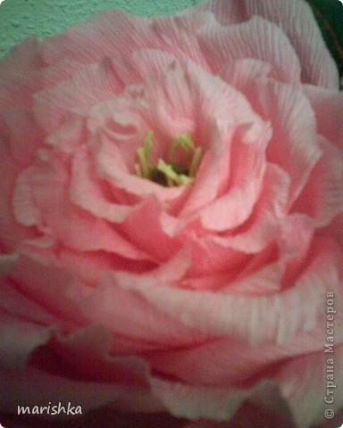 Было замечательное настроение и я решила сделать большие розочки. Первую,с диаметром цветка примерно 15 см, я сделала из гофрированной бумаги(гофр бумага для оформления букетов,более жесткая ,чем обычная гофрированная бумага). фото 1