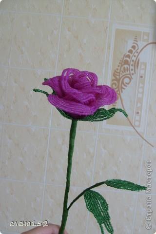 Моя роза фото 1
