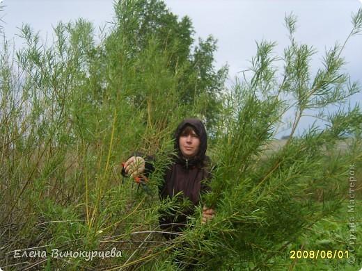 КОШКИН ДОМ. фото 10