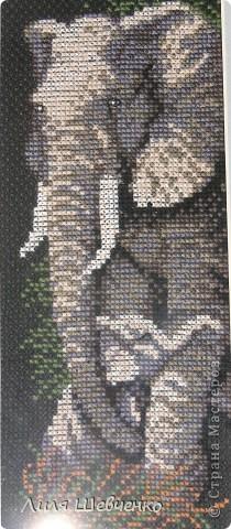 вышивать на чёрной канве было немного сложновато, но я думаю, это того стоило! фото 2