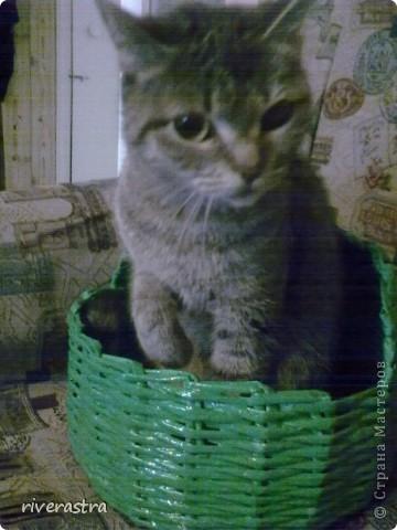 Живет у моей свекрови вот такая кошка - Буся! фото 8