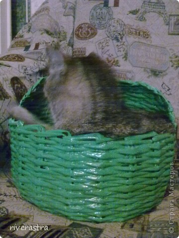 Живет у моей свекрови вот такая кошка - Буся! фото 7
