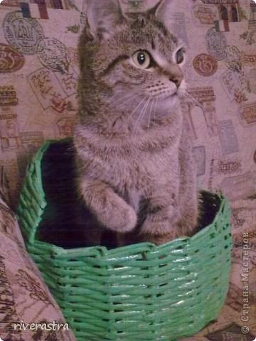 Живет у моей свекрови вот такая кошка - Буся! фото 3