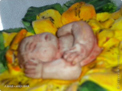лилейный малыш фото 2