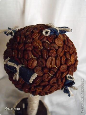 Кофейные деревья. фото 7