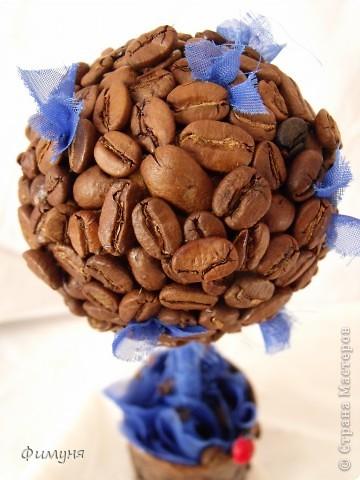 Кофейные деревья. фото 9