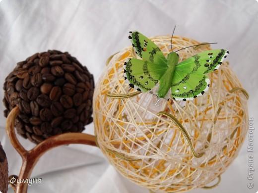 Кофейные деревья. фото 11