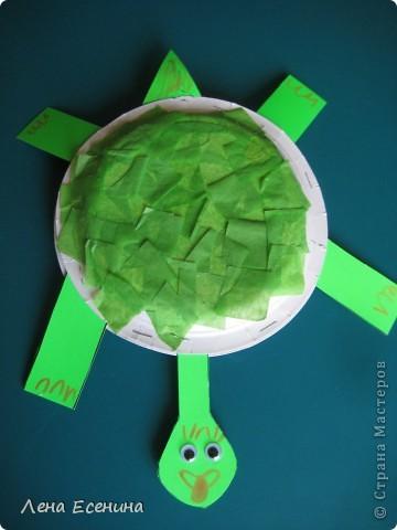 Черепаха сделана из двух тарелок. Внутрь насыпана крупа (для звука). Тарелки закреплены степлером. Плотная бумага - для хвоста и лап. Панцирь - тонкая бумага. Вращающиеся глаза. фото 1