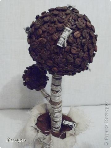 Кофейные деревья. фото 1