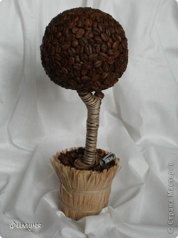 Кофейные деревья. фото 3