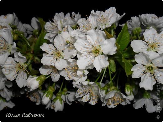 Привет!!!!!Поздравляю всех с весенними праздниками!Желаю всем счастья и добра!Радости и хорошего настроения!Я уже приглашала вас дорогие в наш сад ,когда светило солнышко и летали божьи коровки,а теперь предлагаю провести романтичный вечер у нас в саду!Добро пожаловать!Вы уже чувствуете головокружительные  ароматы весны?Это цветёт абрикос. фото 5