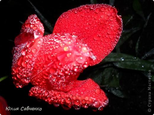 Привет!!!!!Поздравляю всех с весенними праздниками!Желаю всем счастья и добра!Радости и хорошего настроения!Я уже приглашала вас дорогие в наш сад ,когда светило солнышко и летали божьи коровки,а теперь предлагаю провести романтичный вечер у нас в саду!Добро пожаловать!Вы уже чувствуете головокружительные  ароматы весны?Это цветёт абрикос. фото 8