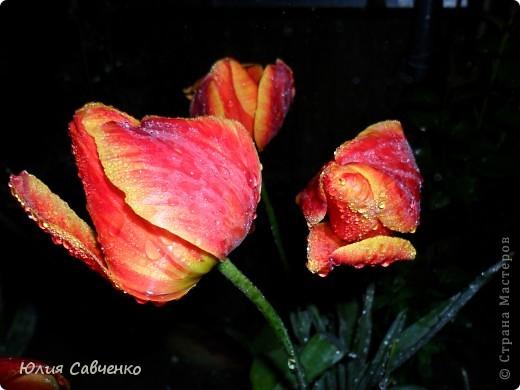 Привет!!!!!Поздравляю всех с весенними праздниками!Желаю всем счастья и добра!Радости и хорошего настроения!Я уже приглашала вас дорогие в наш сад ,когда светило солнышко и летали божьи коровки,а теперь предлагаю провести романтичный вечер у нас в саду!Добро пожаловать!Вы уже чувствуете головокружительные  ароматы весны?Это цветёт абрикос. фото 9