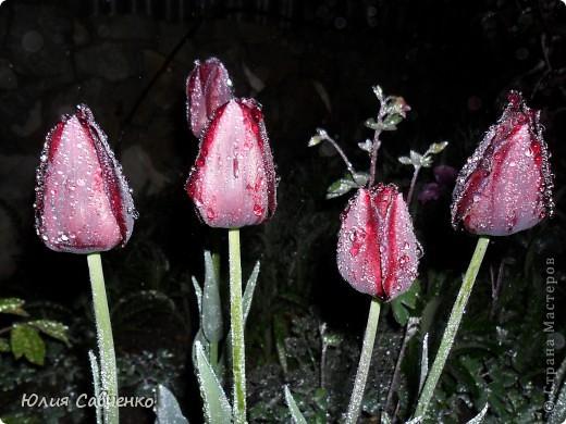 Привет!!!!!Поздравляю всех с весенними праздниками!Желаю всем счастья и добра!Радости и хорошего настроения!Я уже приглашала вас дорогие в наш сад ,когда светило солнышко и летали божьи коровки,а теперь предлагаю провести романтичный вечер у нас в саду!Добро пожаловать!Вы уже чувствуете головокружительные  ароматы весны?Это цветёт абрикос. фото 11