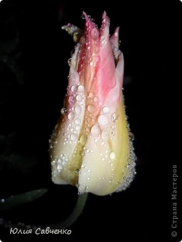 Привет!!!!!Поздравляю всех с весенними праздниками!Желаю всем счастья и добра!Радости и хорошего настроения!Я уже приглашала вас дорогие в наш сад ,когда светило солнышко и летали божьи коровки,а теперь предлагаю провести романтичный вечер у нас в саду!Добро пожаловать!Вы уже чувствуете головокружительные  ароматы весны?Это цветёт абрикос. фото 16