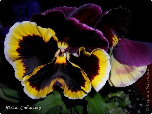 Привет!!!!!Поздравляю всех с весенними праздниками!Желаю всем счастья и добра!Радости и хорошего настроения!Я уже приглашала вас дорогие в наш сад ,когда светило солнышко и летали божьи коровки,а теперь предлагаю провести романтичный вечер у нас в саду!Добро пожаловать!Вы уже чувствуете головокружительные  ароматы весны?Это цветёт абрикос. фото 24