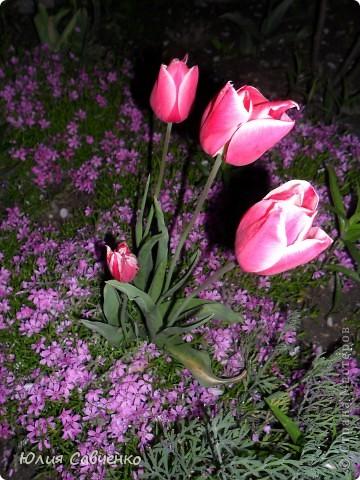Привет!!!!!Поздравляю всех с весенними праздниками!Желаю всем счастья и добра!Радости и хорошего настроения!Я уже приглашала вас дорогие в наш сад ,когда светило солнышко и летали божьи коровки,а теперь предлагаю провести романтичный вечер у нас в саду!Добро пожаловать!Вы уже чувствуете головокружительные  ароматы весны?Это цветёт абрикос. фото 17