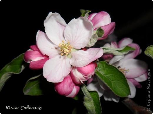 Привет!!!!!Поздравляю всех с весенними праздниками!Желаю всем счастья и добра!Радости и хорошего настроения!Я уже приглашала вас дорогие в наш сад ,когда светило солнышко и летали божьи коровки,а теперь предлагаю провести романтичный вечер у нас в саду!Добро пожаловать!Вы уже чувствуете головокружительные  ароматы весны?Это цветёт абрикос. фото 6