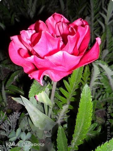 Привет!!!!!Поздравляю всех с весенними праздниками!Желаю всем счастья и добра!Радости и хорошего настроения!Я уже приглашала вас дорогие в наш сад ,когда светило солнышко и летали божьи коровки,а теперь предлагаю провести романтичный вечер у нас в саду!Добро пожаловать!Вы уже чувствуете головокружительные  ароматы весны?Это цветёт абрикос. фото 21