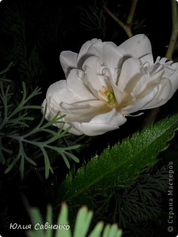 Привет!!!!!Поздравляю всех с весенними праздниками!Желаю всем счастья и добра!Радости и хорошего настроения!Я уже приглашала вас дорогие в наш сад ,когда светило солнышко и летали божьи коровки,а теперь предлагаю провести романтичный вечер у нас в саду!Добро пожаловать!Вы уже чувствуете головокружительные  ароматы весны?Это цветёт абрикос. фото 22