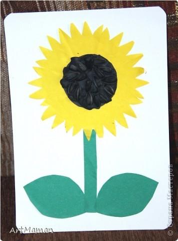 Делали с дочкой в 1 г. 8 мес. Поделка может показаться сложноватой для малыша, но только на первый взгляд. На самом деле все просто. Сначала мы приклеили стебли, цветы и листья. Детка все мазала клеем, стебли я ей помогала расположить, цветами даже ей промахнуться было тяжело, а листья вообще лепи куда хочешь. У цветов мы приклеили коричневые середки – чтобы потом было понятней, куда лепить пластилин. Дала детке кусок пластилина – они отщипывала и лепила небольшие кусочки на середки. Она не смогла самостоятельно заполнить весь объем – мама помогла доделать. Потом приделывали семечки. Тут маминой помощи потребовалось меньше – так этот процесс ребенка воодушевил. Потом уж сделали забор – т.к. дочь еще была готова что-нить поделать. Забор из гофрокартона (деть его обожает). Перекладинку приделала мама, но детка ее тоже намазала клеем.  фото 2