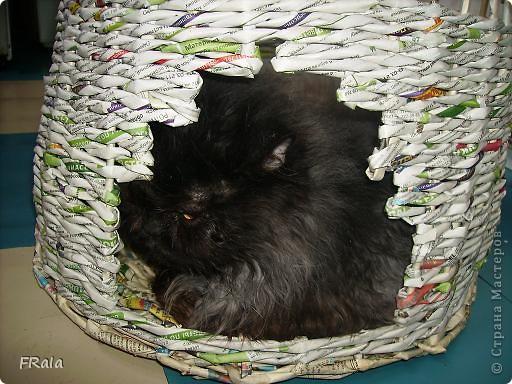 Домик для котов-фоторепортаж фото 6
