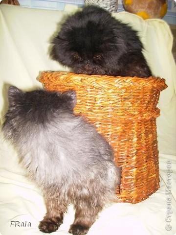 Домик для котов-фоторепортаж фото 10