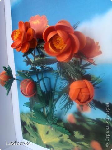 """Вот и у нас на Таймыре наступила весна и скоро тундра """"зажжется"""" этими маленькими, яркими и такими милыми сердцу огоньками!  фото 2"""