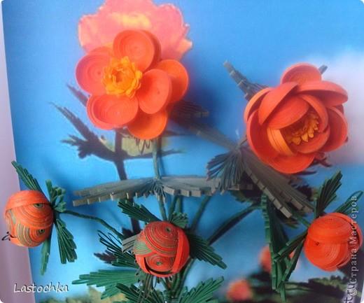 """Вот и у нас на Таймыре наступила весна и скоро тундра """"зажжется"""" этими маленькими, яркими и такими милыми сердцу огоньками!  фото 4"""
