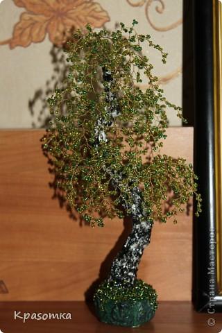 Вот и еще одна береза выросла в моей березово-бисерной роще. фото 3