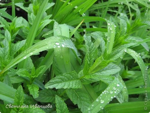 В нашем городе прошел майский дождь. Природа торжествует, умылась к празднику. фото 12