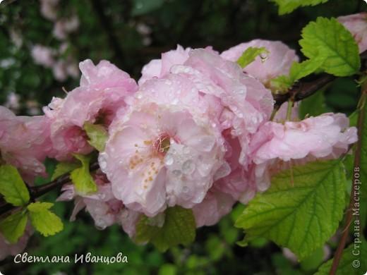 В нашем городе прошел майский дождь. Природа торжествует, умылась к празднику. фото 17