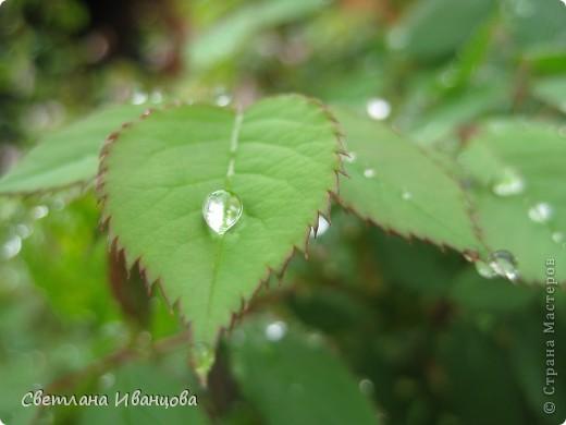 В нашем городе прошел майский дождь. Природа торжествует, умылась к празднику. фото 18
