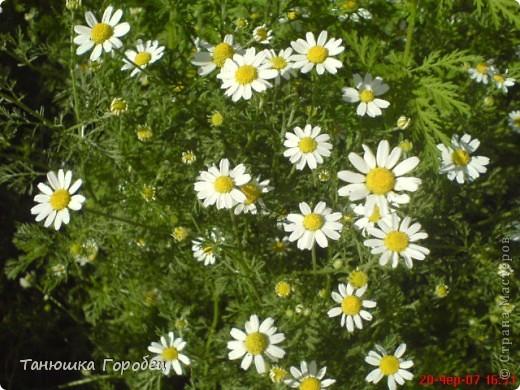 ...Как-то утром на рассвете.... ...Заглянув в весенний сад... фото 6