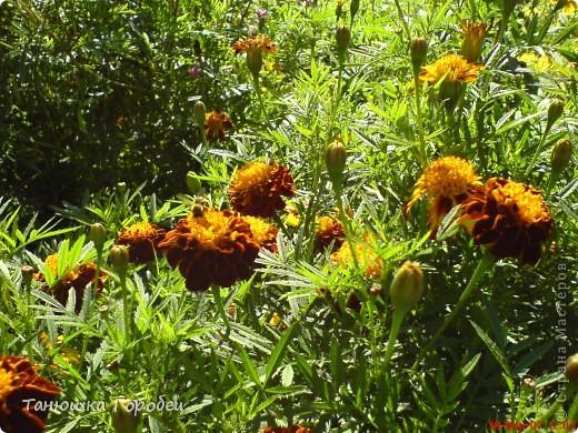 ...Как-то утром на рассвете.... ...Заглянув в весенний сад... фото 10