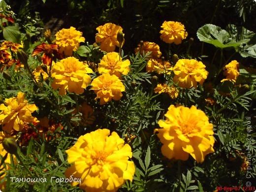 ...Как-то утром на рассвете.... ...Заглянув в весенний сад... фото 7