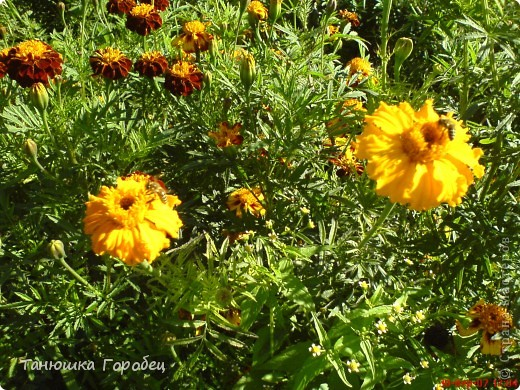 ...Как-то утром на рассвете.... ...Заглянув в весенний сад... фото 9
